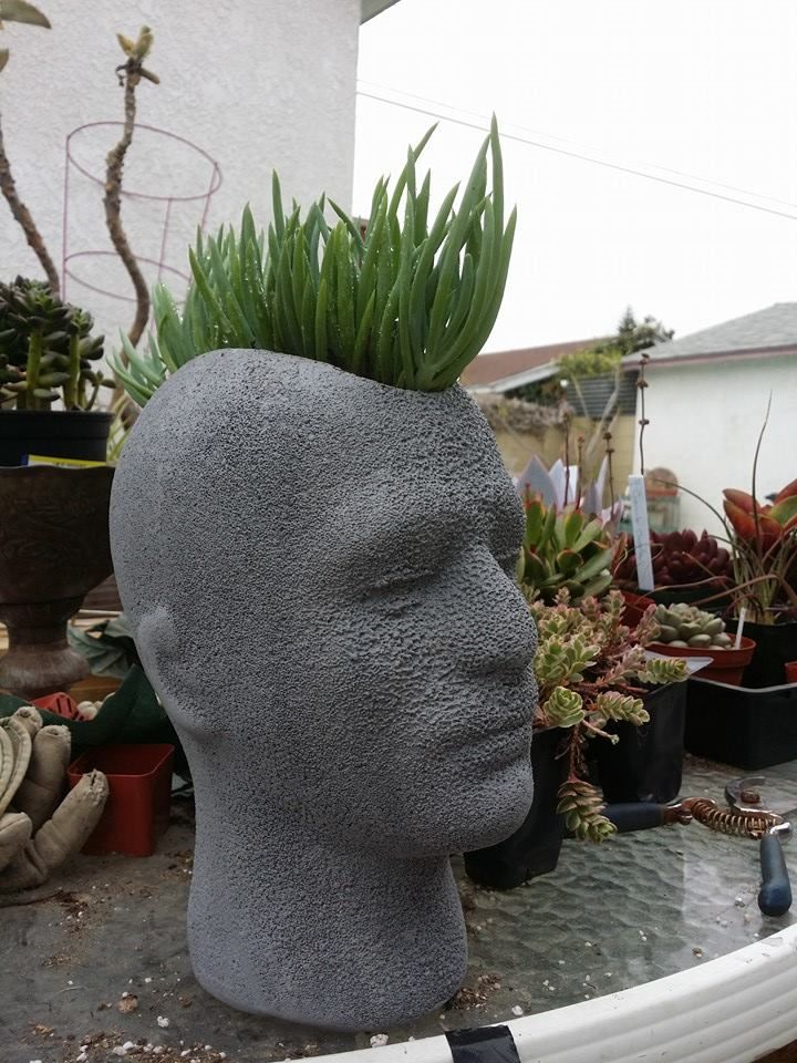 17 Best Ideas About Head Planters On Pinterest Container