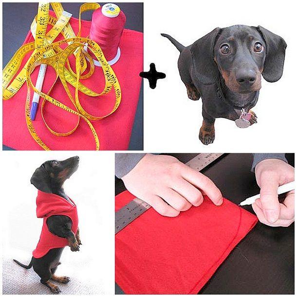 Как сшить одежду для собаки своими руками. Выкройка и мастер-класс