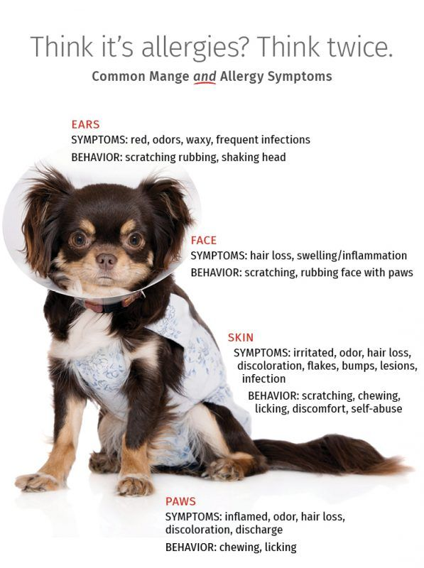 What Type Mange Is It Try The Dog Mange Symptom Checker