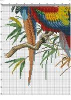 3 tropical birds picture 4. Gallery.ru / Фото #6 - 78 - kento