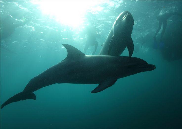 Polperro Dolphin & Seal Swins