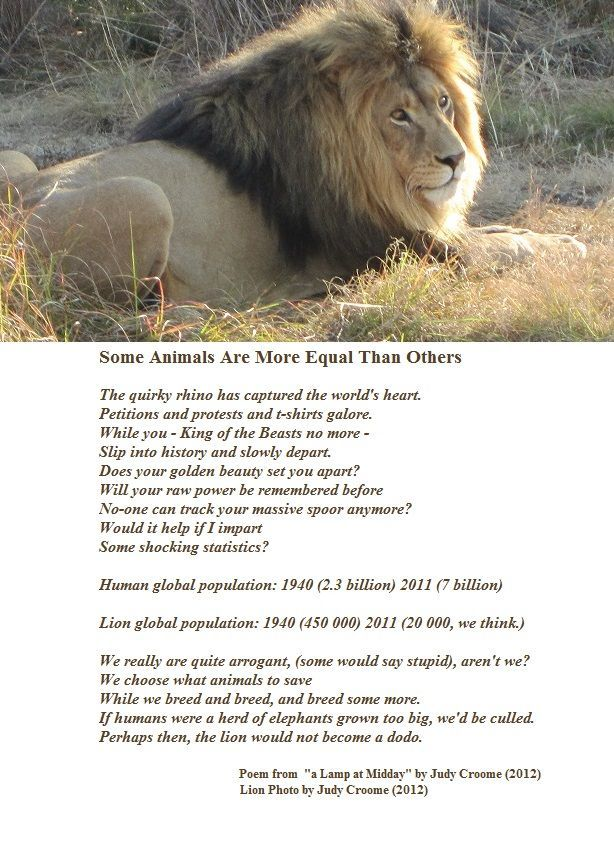 "A poem calling for the saving of lions from extinction written by Judy Croome in 2010 from ""a Lamp at Midday"" by Judy Croome"