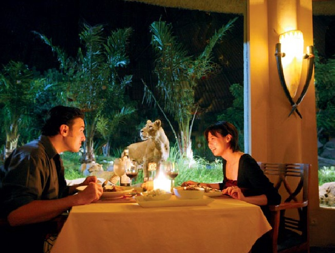 Tsavo Lion Restaurant at Bali Safari & Marine Park allows guest to dine, wine, and have up-close-and-personal encounters with the lion. Guest are of course safe within a glass walled 'cage' in the middle of the park's lion exhibit.
