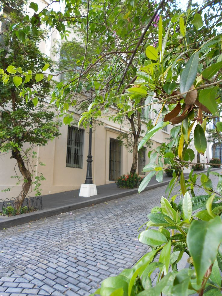 A peaceful street veiw.
