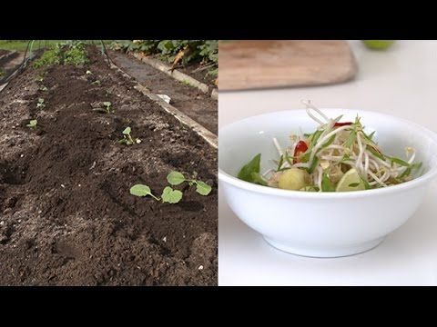 Organic Edible Garden shows you how to put homegrown produce on the table every day.