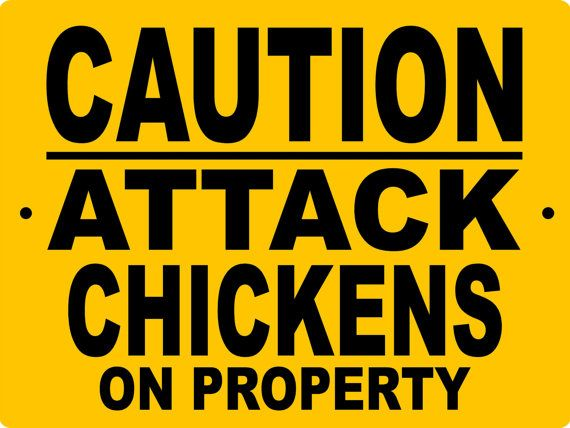 Chicken Funny Signs Quotes: Best 25+ Chicken Signs Ideas On Pinterest