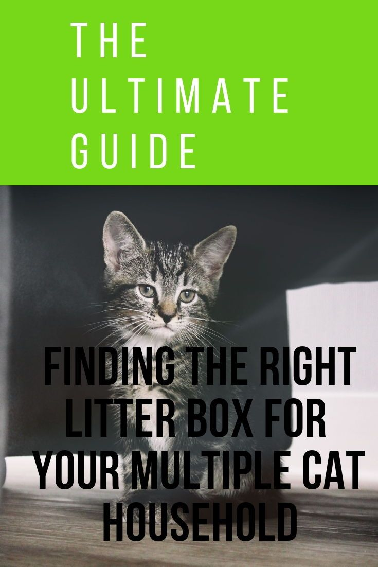 The Best Litter Box For Multiple Cats That Will Make Your Life Easier The Cat Mama Best Litter Box Cat Litter Smell Litter Box
