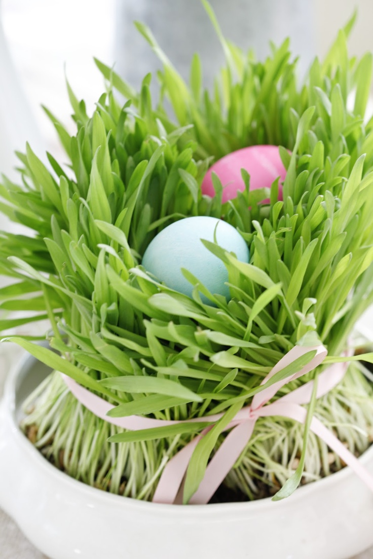 Table decor, grow wheat grass in small pots and set eggs on top of grass. Wheat grass grows quickly!!