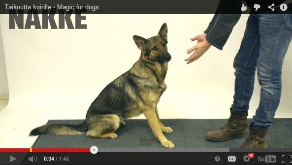 """This is Adorable: Dogs React to """"Vanishing Treat"""" Magic Trick [Video]"""