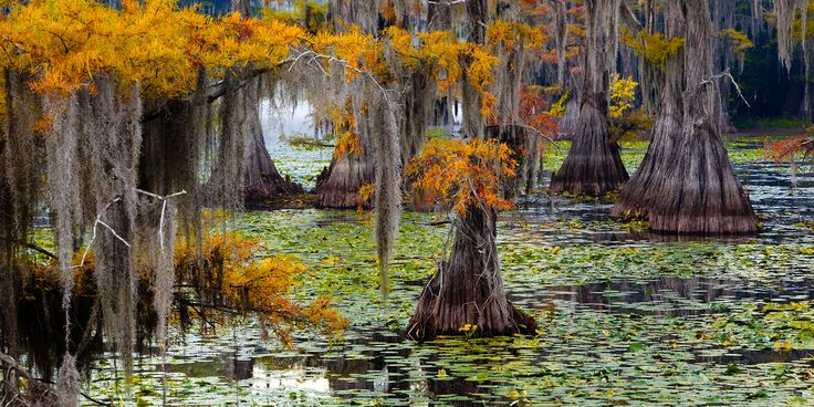 From dark swamps thick with cypress trees to sun-kissed marshes home to herons and egrets, the Mississippi River Delta is a watery, photogenic wonderland.