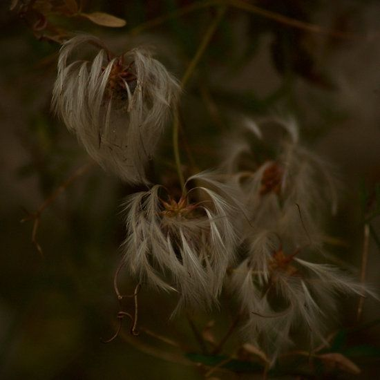 Feathery Flower - Michelle Thompson