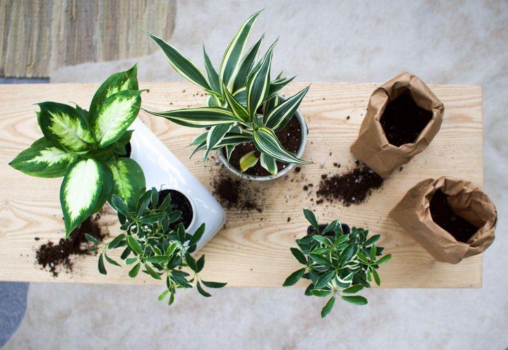 UO DIY: Indoor Growing