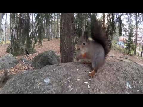 Laulu oravasta  - Mikko Perkoila - YouTube