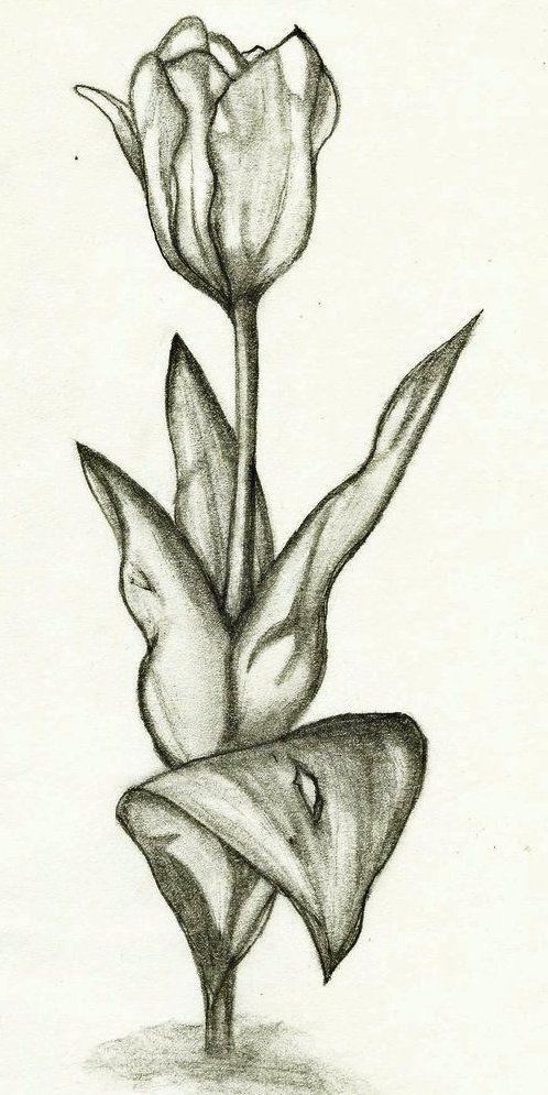 Sketsa Gambar Bunga Tulip Nan Unik Resep Untuk Dicoba Pinterest Tulip