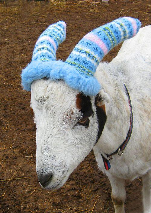 letshearitforthegoats: horn warmers
