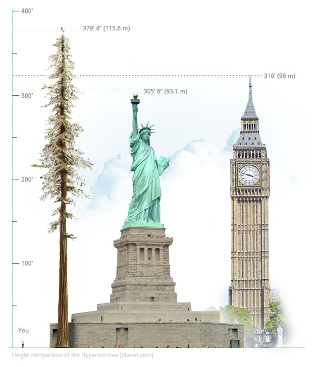 Image result for statue of liberty vs empire state building vs redwoods