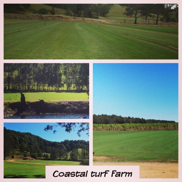 The Coastal Turf Farm