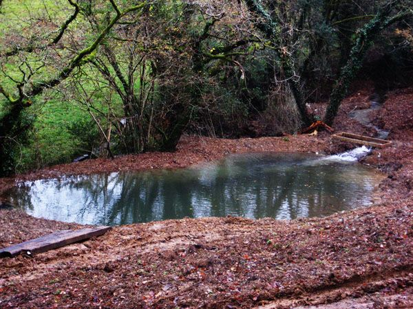 Embankment pond small natural pond campground idea for Design of pond embankment