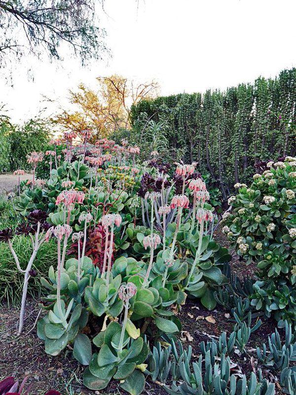 Karoo garden