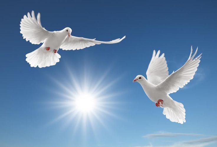 Two Doves #birds #birdlovers #birdwatcher #birdphotography