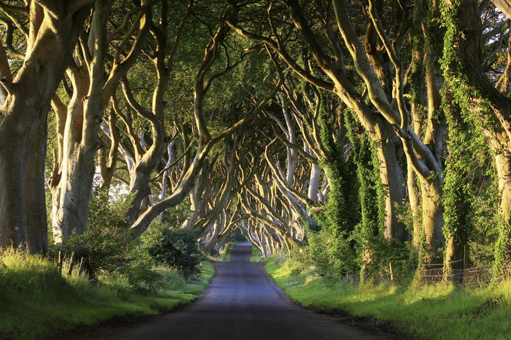 Dark Hedges, Ballymoney, Northern Ireland | 21 Surreal Places In The UK To Add To Your Bucket List