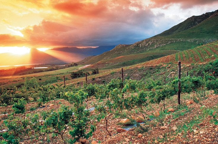 Multi-Year Trends | Grootbos (Image courtesy of Jacques Smit) #SAWi #wine #vineyards