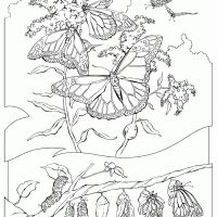 76 best Coloring Sheets images on Pinterest
