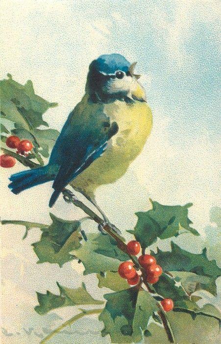 Little blue bird on holly branch ~ Catherine Klein