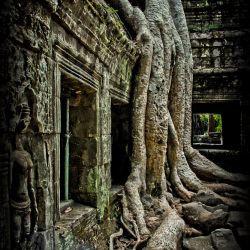 Angkor Wat   Ta Phrom