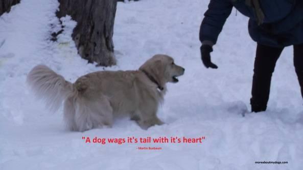 When A Dog Dies Quotes Quotesgram: Famous Dog Quotes. QuotesGram