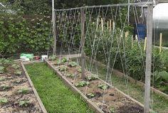 Добиться высокого урожая огурцов в открытом грунте без шпалеры практические невозможно. Я хочу рассказать вам, как мы с мужем сделали шпалеры для огурцов из материалов, оставшихся после строительства…