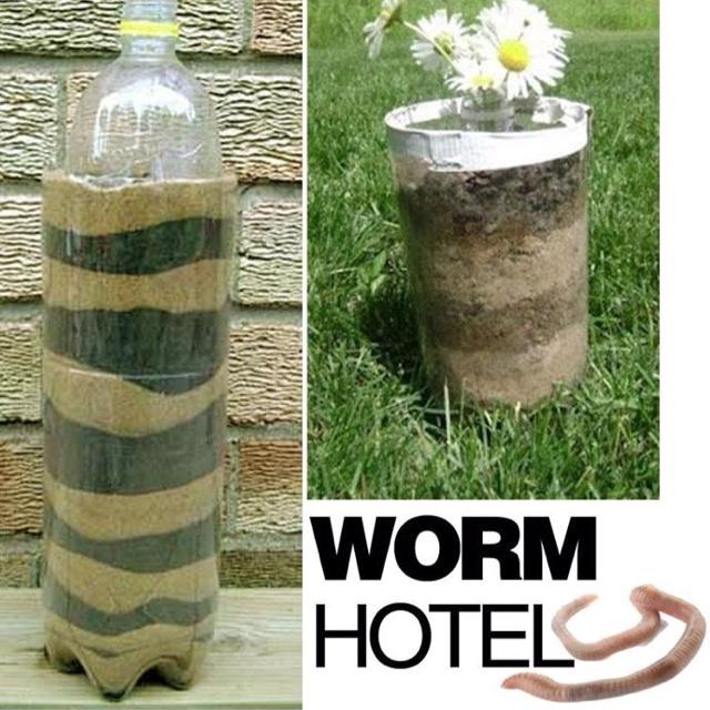 Funky worm hotel
