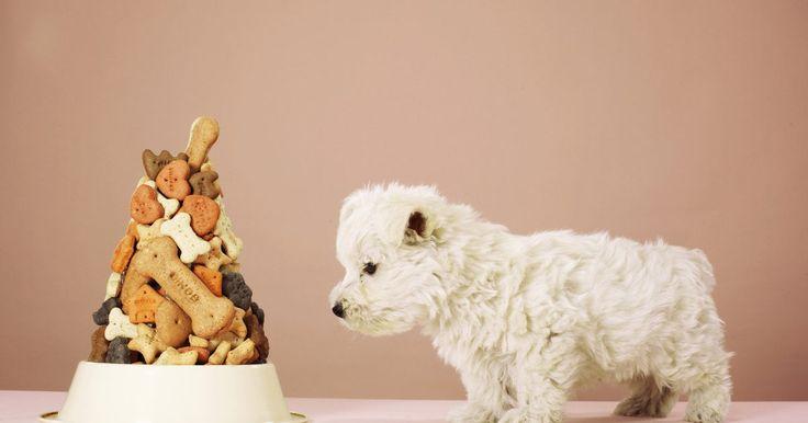 Como fazer cupcakes para cães. O melhor amigo do homem também gosta de ganhar um doce de vez em quando. Apesar da maioria dos cães gostar de consumir a comida para seres humanos, alguns alimentos são muito encorpados ou não são saudáveis, podendo causar dor de estômago, resultando em fezes amolecidas ou vômitos. Em vez de dar a seu cão cupcakes normais ou outros petiscos, ...
