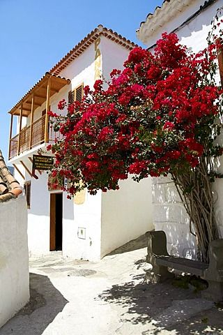 Marquitos Bakery and flowering bougainvillea bushes, Fataga, Gran Canaria, Canary Islands, Spain, Europe
