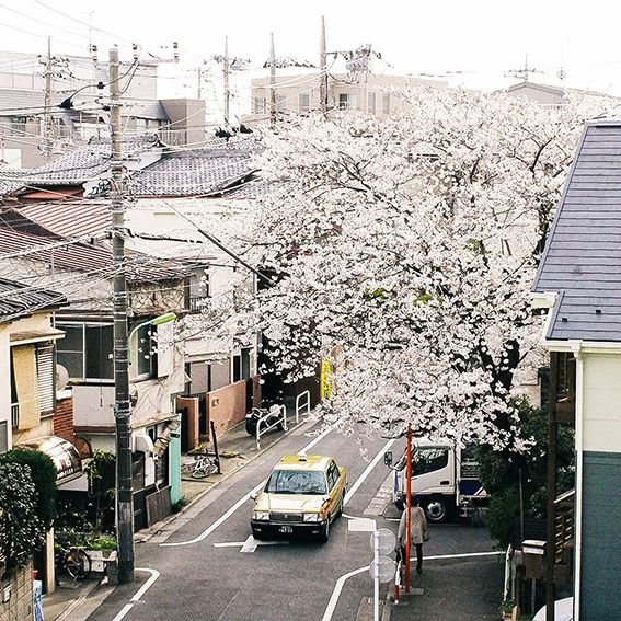 Sakura view from Hello Sandwich Tokyo apartment.