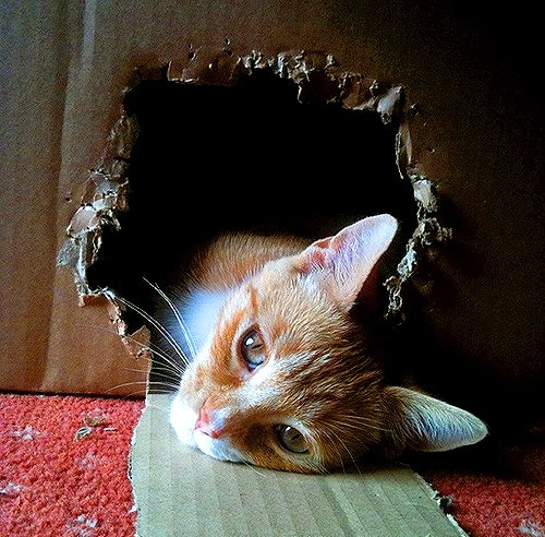 :-DCat Outside The Boxes, Funny Cats, Kitties Cat, Cat Meow, Kitty Meow Meow, Cat Iii, Cat Life, Cat Pictures, Animal 33