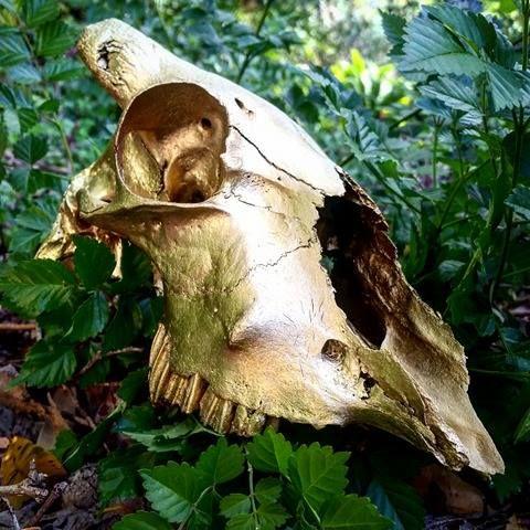Gilded Skulls