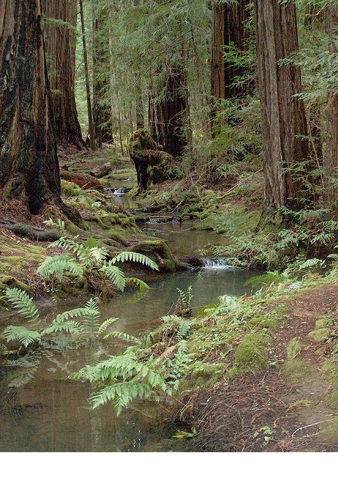 Where are the Redwoods The Hippies and Loggers Fought Over? Northern California's Headwaters Forest Reserve