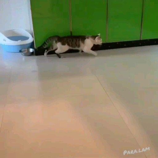 Folgen Sie für weitere Katzenvideos – Tiere