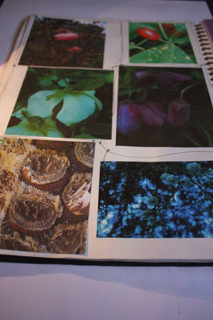 Natural forms sketchbook