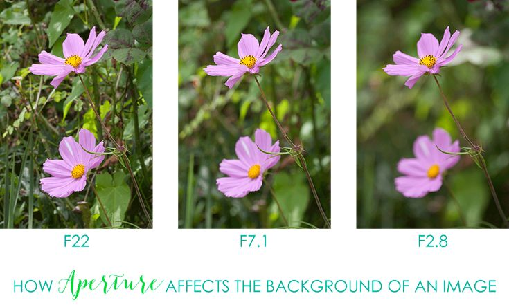 Camera Exposure Meaning in Plain English - Learn the definition of exposure, how aperture and shutter speed impact exposure & how this improves your photos.