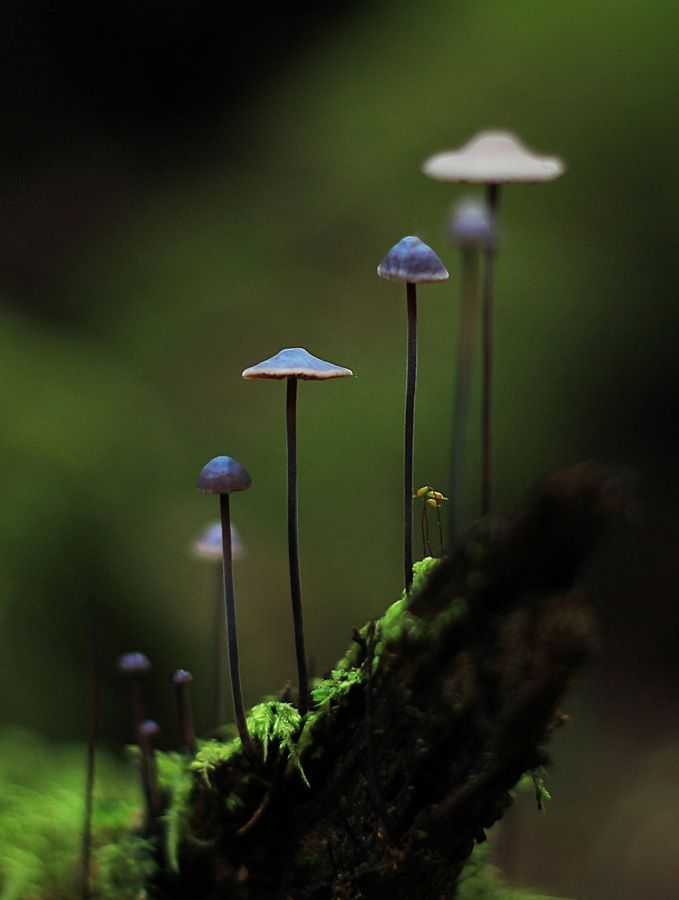Mushrooms by Andrew C Wallace