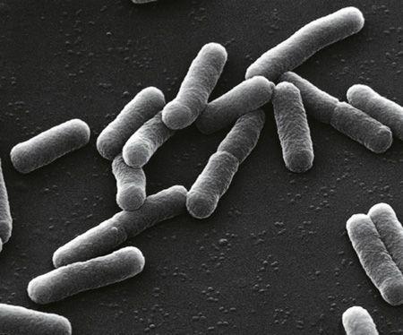 Diarrhée : émission aiguë ou chronique de selles anormales | LEEM - Les entreprises du médicament
