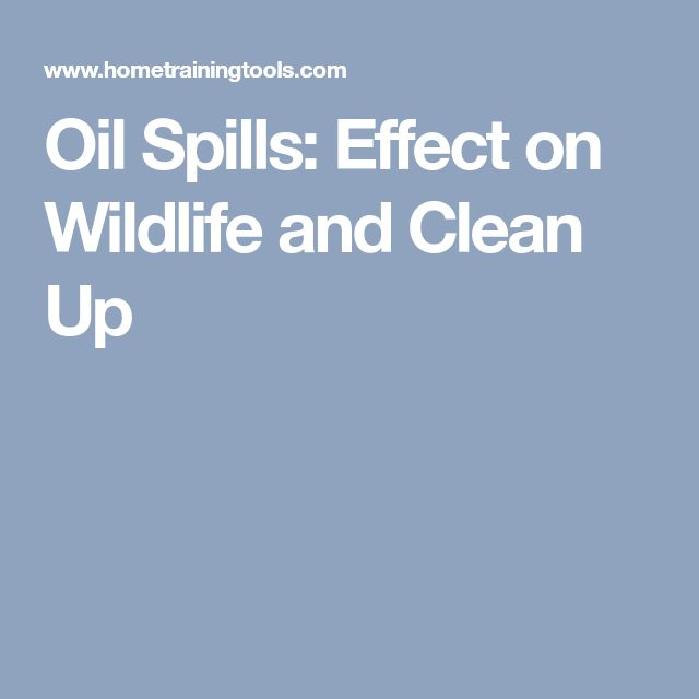 Oil Spills: Effect on Wildlife and Clean Up