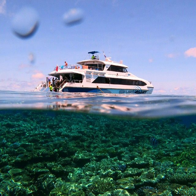 The best of both worlds - a day on a boat and the Great Barrier Reef http://blog.queensland.com/2014/10/03/gallery/ #thisisqueensland