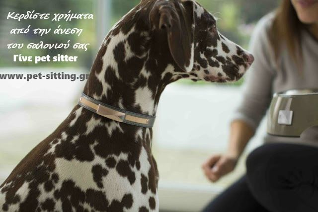 Pet Sitting: Γίνε pet sitter και κέρδισε χρήματα με αυτό που αγ...