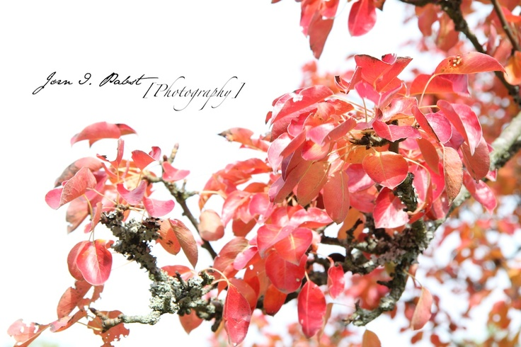 fall, autum, leaves, photography