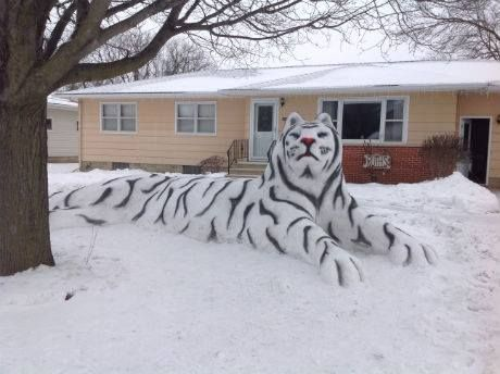 WOW! There's been a tiger sighting in town...well, a snow tiger.
