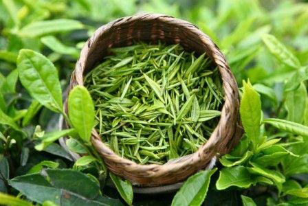 Польза и вред зеленого чая для женщин и мужчин. Употребление при беременности и при грудном вскармливании. Бодрит или успокаивает напиток? разжижает или сгущает кровь