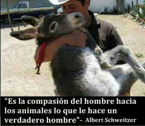 La compasión.